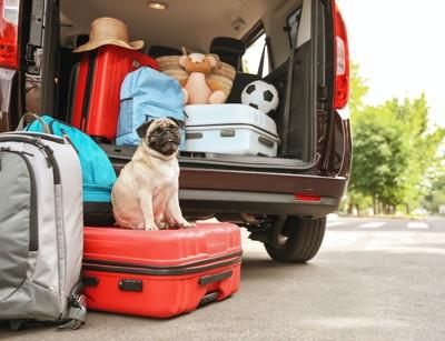 車に積んだ荷物とトランクに座る犬