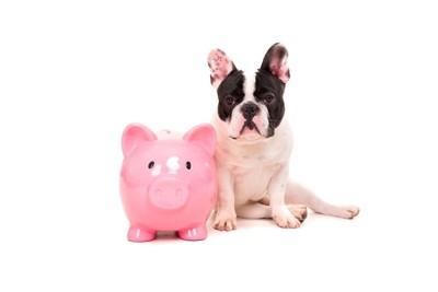 貯金箱お金と犬