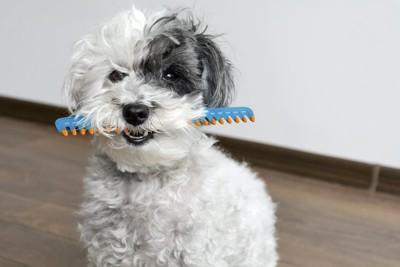 ブラシを口にくわえている犬