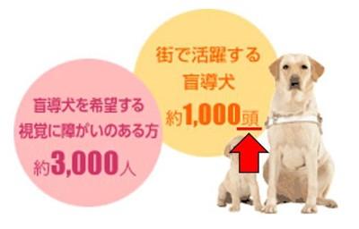 日本法人盲導犬協会の資料