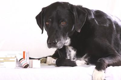薬品を前にする犬