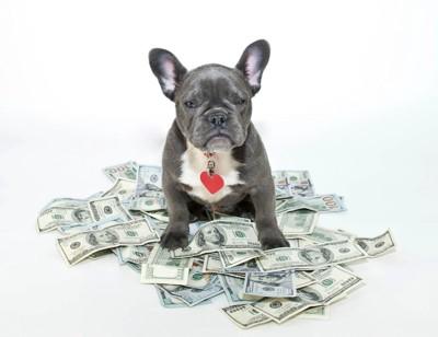 お金の上に座る犬
