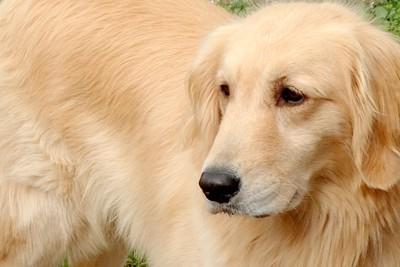 #考える犬#