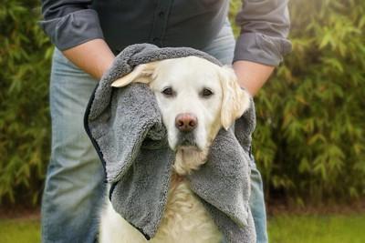 タオルで拭いてもらう犬