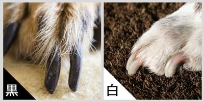 黒い爪と白い爪の比較
