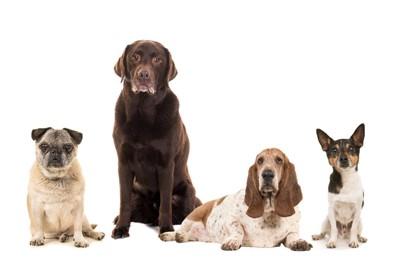 いろいろな犬種4頭