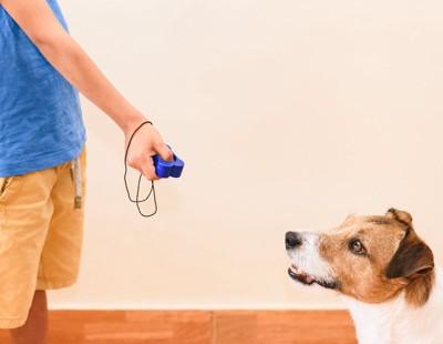 クリッカートレーニングをしている犬
