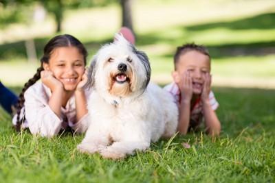 子供と一緒に芝生に寝転ぶ犬