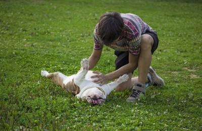仰向けに寝転がる犬のお腹を撫でる男性