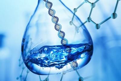 パピヨンの遺伝子イメージ