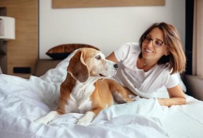ベッドの上の女性とビーグル犬