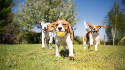 芝生の上を走り回って遊ぶ犬たち