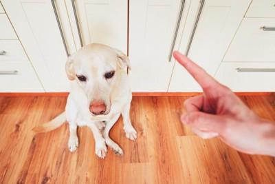 飼い主に叱られて座っている犬