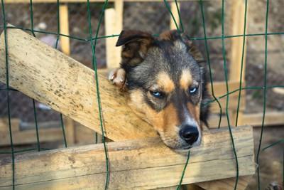 網から顔を出している犬