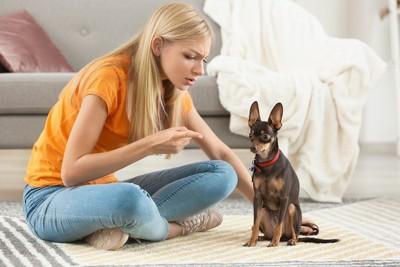 座って飼い主に叱られている犬