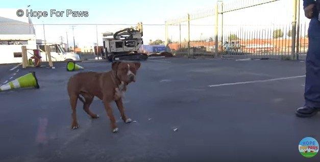 距離を取っている犬
