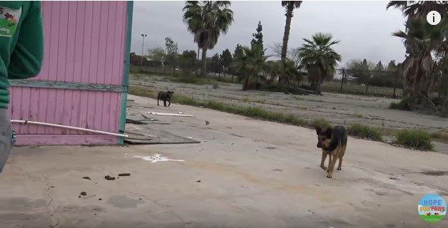 食べ物を追ってくる犬