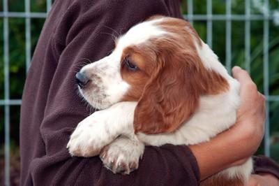 飼い主に抱っこされるたれ耳の犬