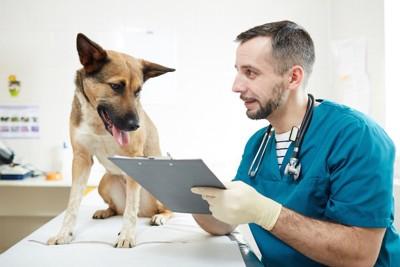 病院でカルテを見る獣医師と犬