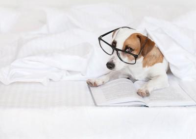 眼鏡をかけて本を読む犬