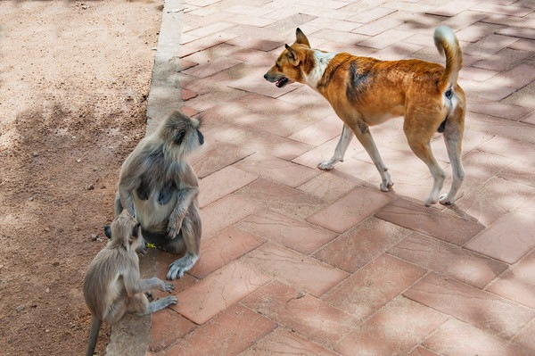 128683422 砂浜にいる犬と猿