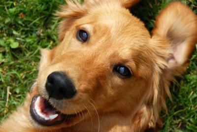 表情のある犬