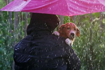 雨が降っている中飼い主に抱えられている犬