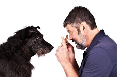 黒い犬に話しかける男性