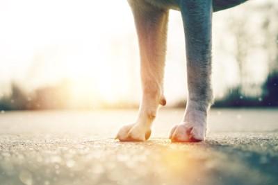 立っている犬の足