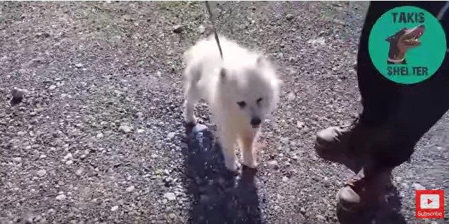 道路脇で発見された老犬