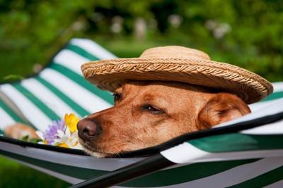 帽子をかぶっている犬