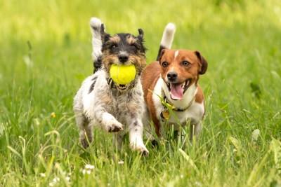 草原で遊ぶ2頭の犬