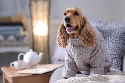 ぶかぶかな服を着る犬