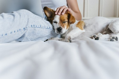 ベッドの上でパソコンを見ながら犬を撫でる女性
