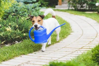 水やりに励む犬