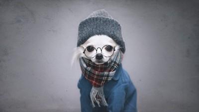 マフラーと帽子とめがねを付けた犬