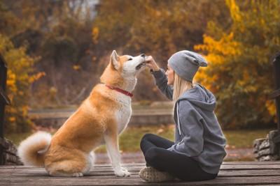 秋田犬と女性
