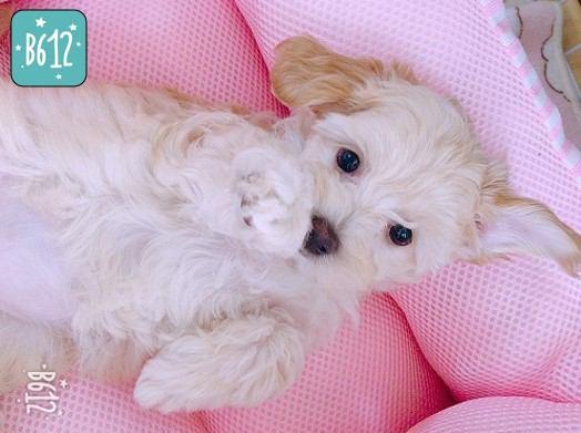 ベッドに寝転ぶ子犬