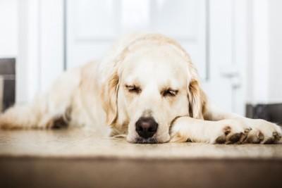 玄関前に眠る犬