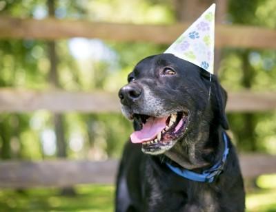 パーティー帽子をかぶった犬