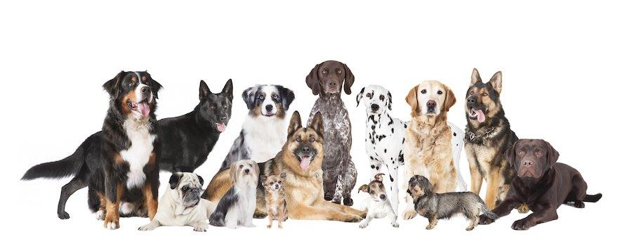 大型犬から小型犬までたくさんの犬