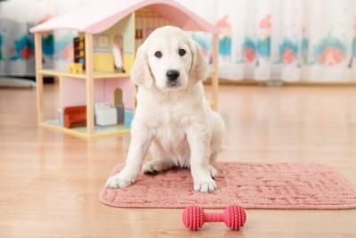 骨の形のおもちゃで遊んでいる犬