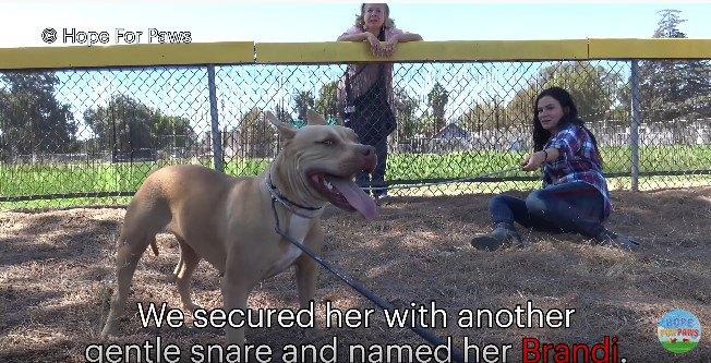 2本のワイヤリードで固定された犬