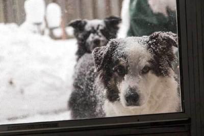 頭に雪が積もっている犬