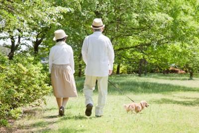 公園を散歩する犬と夫婦