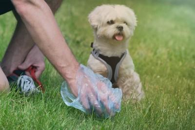 犬のウンチをとる男性の手
