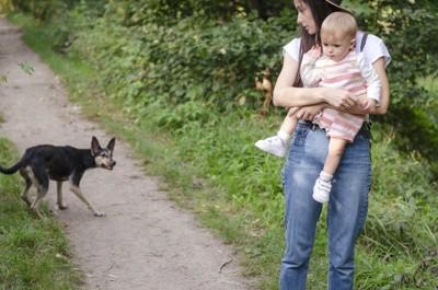 放し飼いの犬を警戒する赤ちゃんを抱いた女性