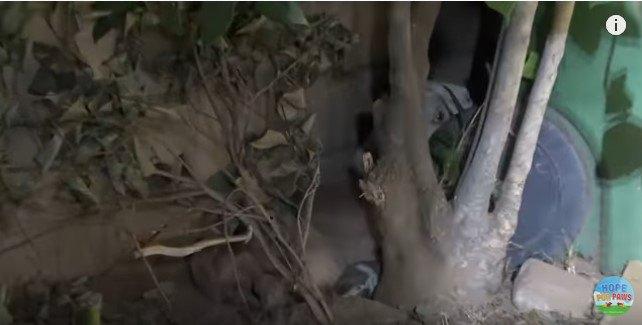木の後ろに隠れた犬