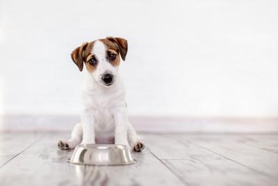 餌入れの前でおすわりしている犬