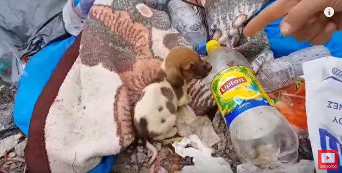 ゴミの中の子犬ブチ子犬